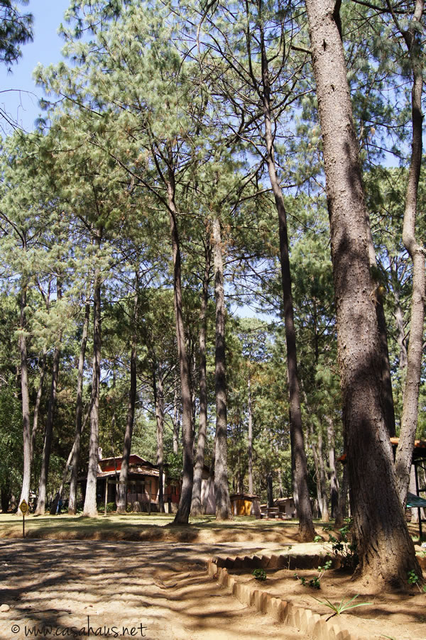 bosque cr