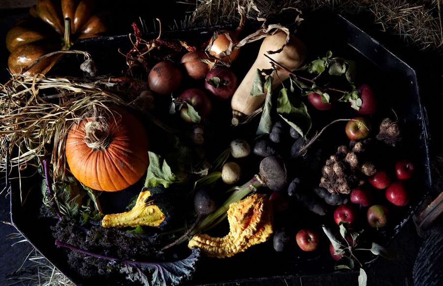 fall fruits by anna williams photography