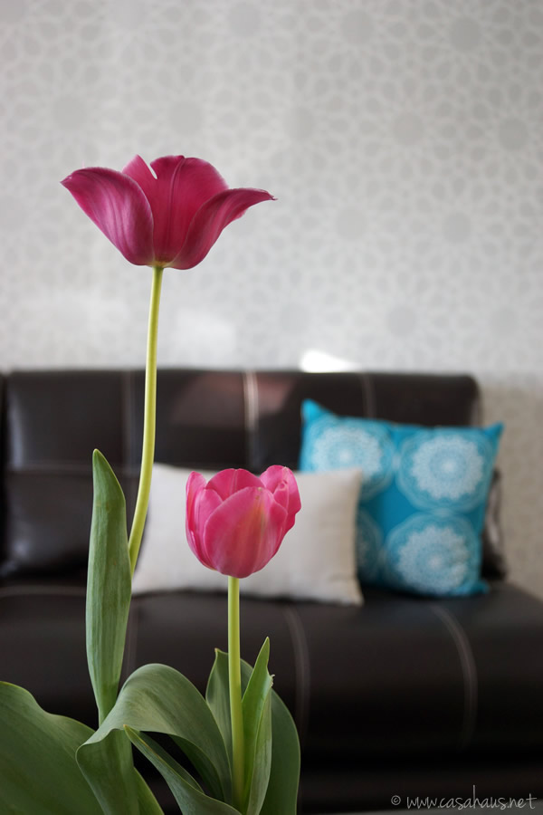 Tulips / tulipanes